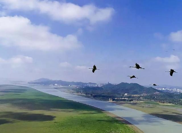 候鸟来了!带好相机,一起去鄱阳湖定格鸟儿的身