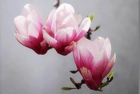 十个现实句子:心若计较,时时都有怨言;心若宽容