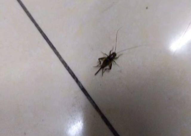 男子抓到一只蟋蟀,用它预测足球赛输赢,结果…